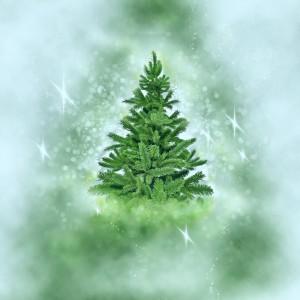christmas-tree-2991189_1920